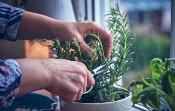 6 گیاه دارویی با پرورش ساده برای باغبان های مبتدی