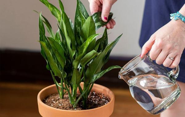 24 گیاه آپارتمانی جذاب که کشتن آن ها تقریبا غیرممکن است