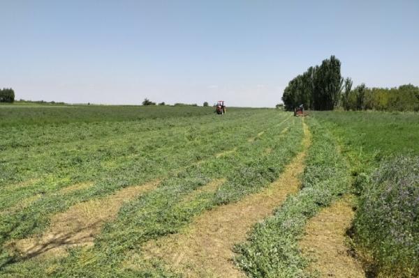 خبرنگاران سم پاشی بیش از 27 هزار هکتار زمین کشاورزی لرستان انجام شد