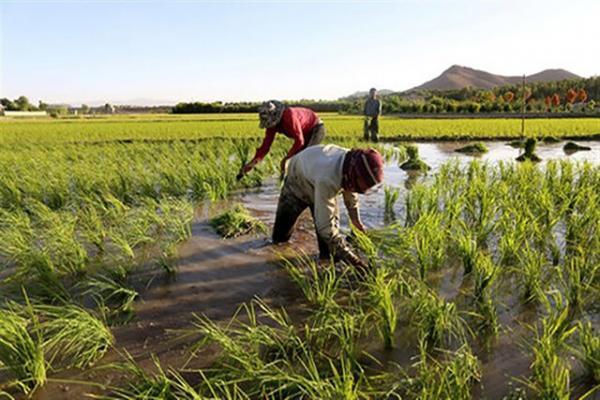 کشت محصولات پرآب بر مساوی با برداشت زیان